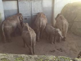 5 elephants.