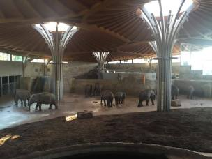 Elephant enclave.